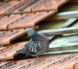 Roof Repair Birds
