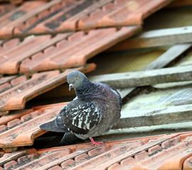 Roof Repair Birds